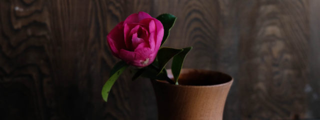 季節の花山茶花